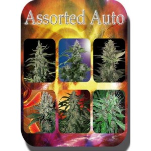 Assorted (Autofloreciente) 10 Semillas