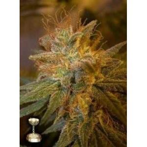 Semillas de Marihuana Kushberry 6 Unidades