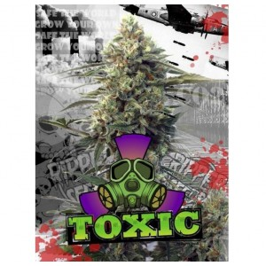 Toxic de Ripper Seeds