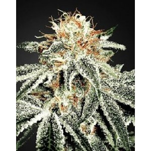 White widow Green House