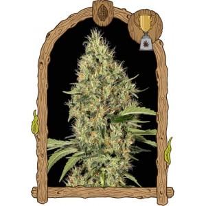 Semillas de Marihuana Gipsy Widow