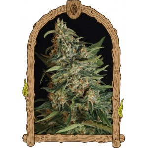 Semillas de Marihuana Green Gummy