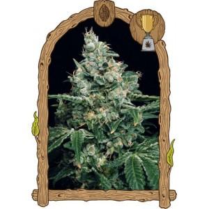 Semillas de Marihuana Sir Jack