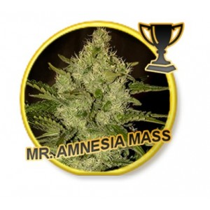 Mr. Amnesia Mass