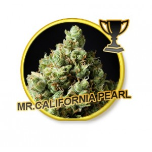 Mr. California Pearls