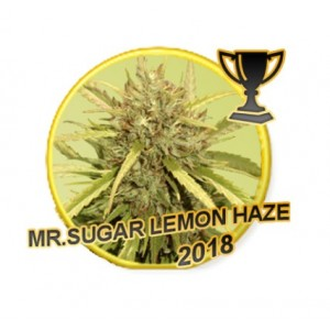 Mr Sugar Lemon Haze