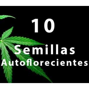 10 - Semilla AUTOFLORECIENTE