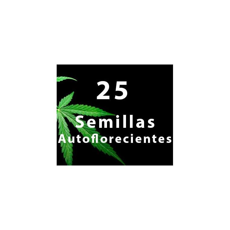25 - Semillas AUTOFLORECIENTES
