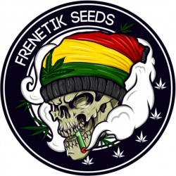 Frenetik Seeds