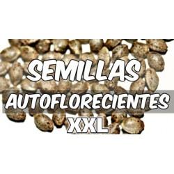 Semillas Autoflorecientes XXL
