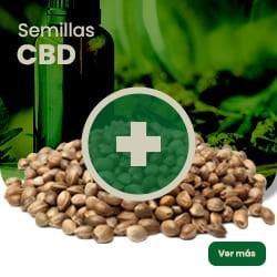 Semillas CBD