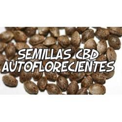 Semillas CBD Autoflorecientes