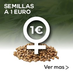 Semillas a 1 Euro