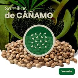 Semillas de Cañamo