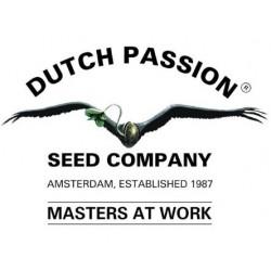 Dutch Passion Auto