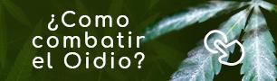 Eliminar Oidio en la marihuana