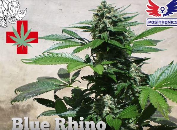 Blue rhino productiva