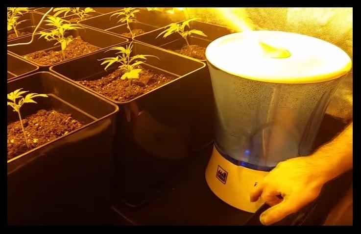 Como Cultivar Marihuana Interior