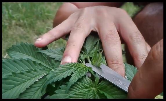 Como evitar que se espiguen las plantas