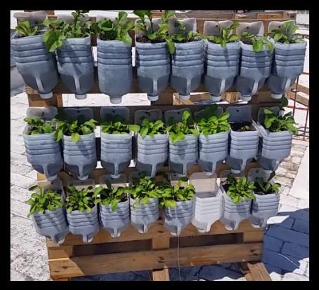 como hacer un cultivo vertical