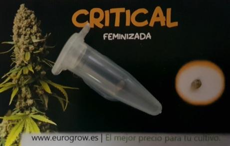 Critical a granel