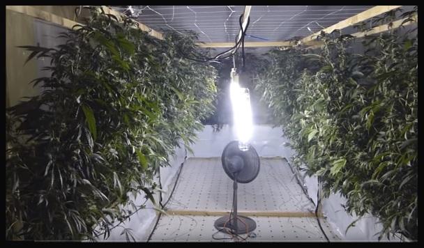 Cultivo Hidroponico Vertical