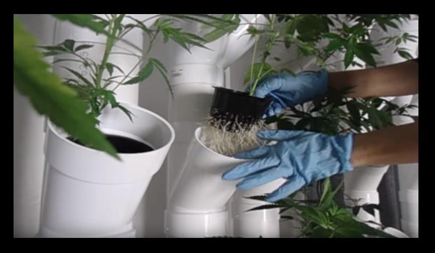 Cultivo Vertical Marihuana