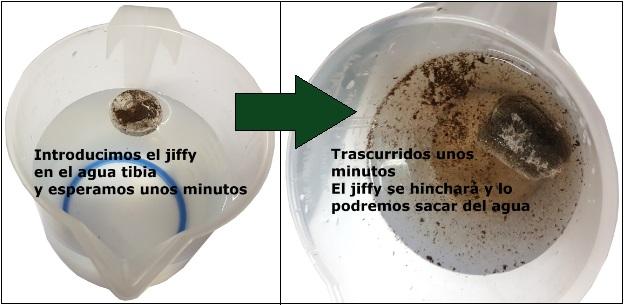 Humeder jiffy para germinar