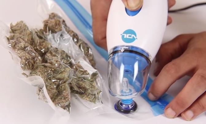 Hongo Marihuana
