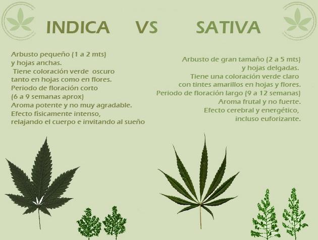 Índica vs Sativa