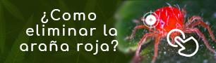 araña roja blog