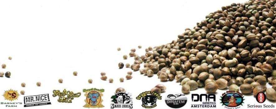 Los mejores bancos de semillas