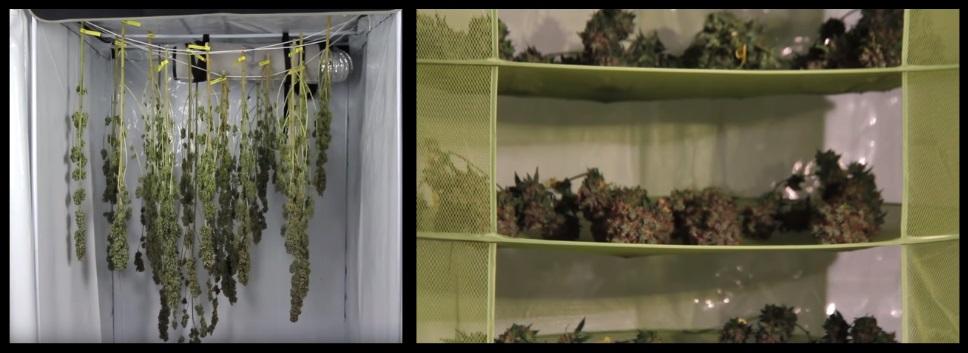 mariguana de interior