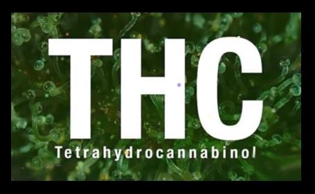 Marihuana con mas THC