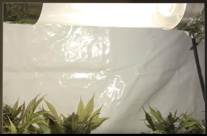 marihuana espigada solucion