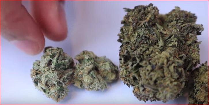 cogollos de marihuana para fumar y perder peso