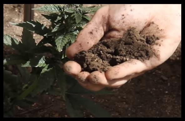 carencia de nitrogeno
