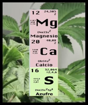 Carencias excesos y soluciones en el cannabis