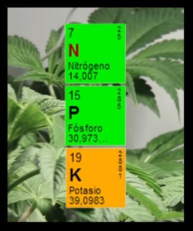 carencias-marihuana
