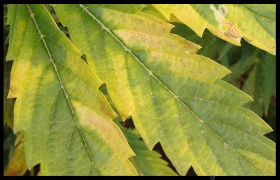 exceso fosforo plantas