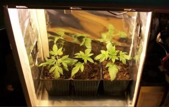 cultivo indoor casero