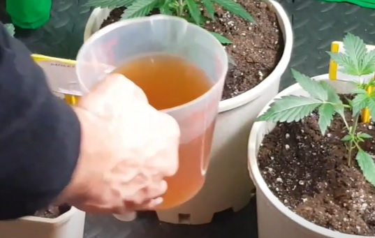 enfermedades-marihuana