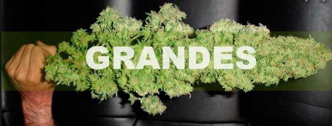 terranabis