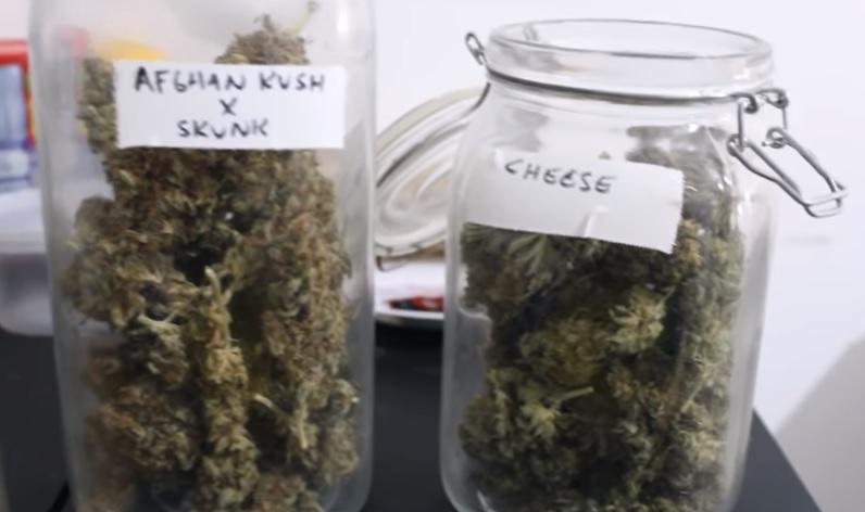 Oidio cannabis