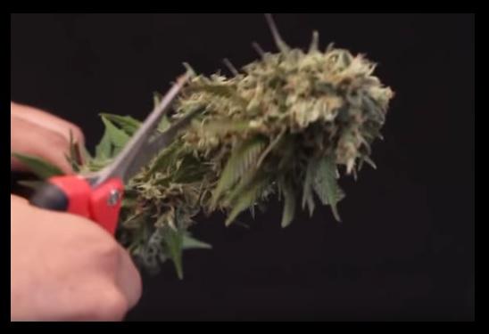 Plantacion marihuana interior