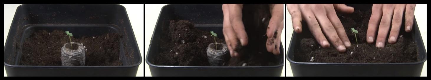 Plantar marihuana interior