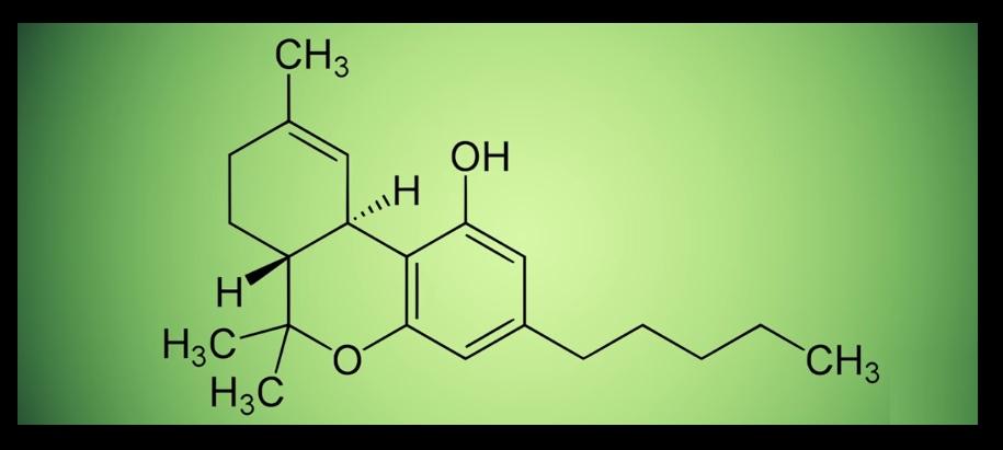 Plantas con THC