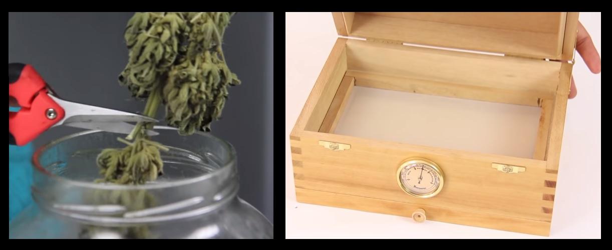 Plantas de marihuana interior