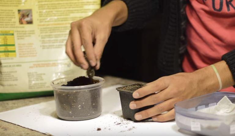 Preparacion de semillero