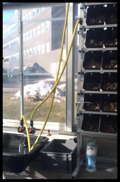 Sistema cultivo vertical marihuana